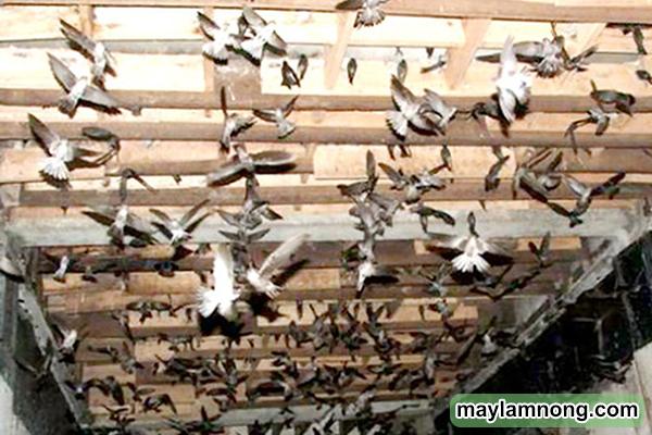 Mô hình nuôi chim yến trong nhà