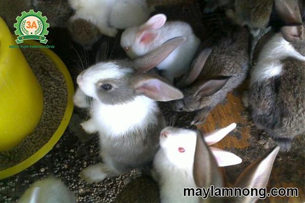 thức ăn viên chứa nguồn dinh dưỡng cao cho thỏ