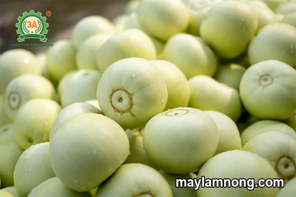 Dưa lê, quả dưa lê, cách trồng dưa lê, kỹ thuật trồng dưa lê, dưa lê siêu ngọt, trồng dưa lê, cách trồng dưa lê siêu ngọt, kỹ thuật trồng dưa lê siêu ngọt