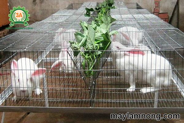 Áp dụng đúng kỹ thuật nuôi thỏ cho năng suất cao