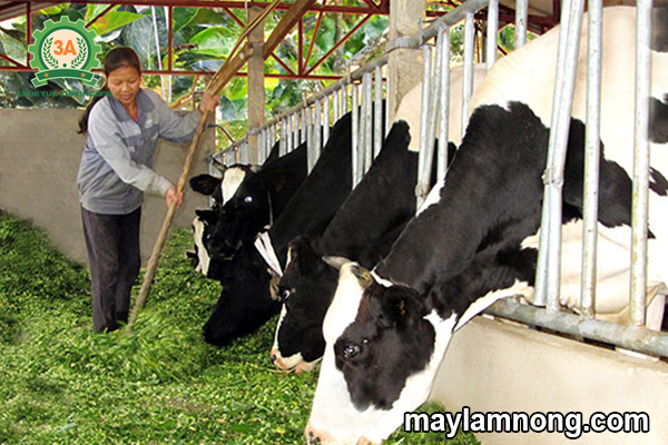 máy băm cỏ, máy xay cỏ, may bam co, máy băm cỏ voi, máy băm cỏ mini, máy băm cỏ cho bò, máy thái cỏ, máy xay cỏ cho bò, máy băm cỏ voi gia re, máy băm cỏ giá rẻ, giá máy băm cỏ cho bò, máy thái cỏ cho bò, may bam co da nang