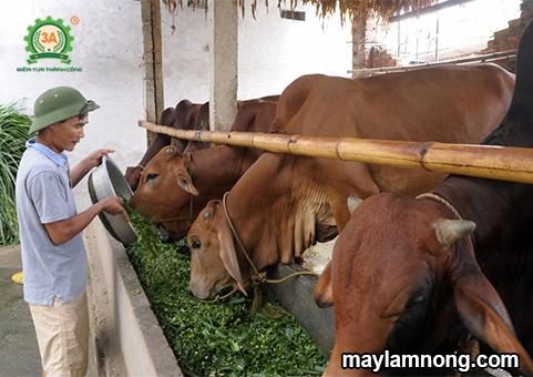 nuôi bò, bò đẻ, nuôi bò sinh sản, kỹ thuật nuôi bò sinh sản, kỹ thuật chăn nuôi bò sinh sản, bò sinh sản, chăn nuôi bò sinh sản, chọn giống bò sinh sản, cách nuôi bò sinh sản, cách chọn bò giống, mô hình nuôi bò sinh sản, cách chăm sóc bò sinh sản, cách phối giống cho bò, cách chăm sóc bò mới sinh, cách chọn bò giống tốt, cách nuôi bò đẻ, kỹ thuật nuôi bò đẻ, cách chọn bò cái giống, mô hình chăn nuôi bò sinh sản