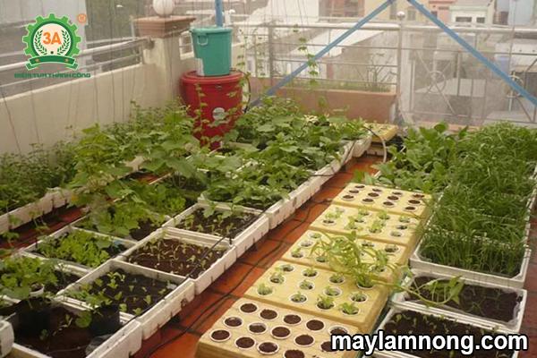 cách trồng rau thủy canh