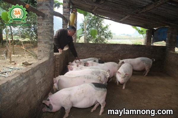 chuồng lợn