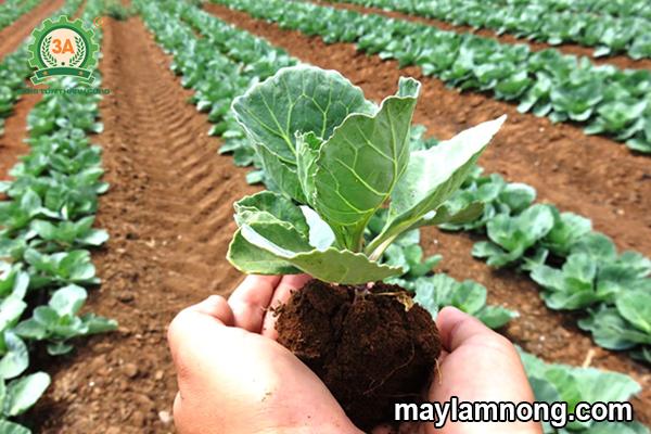 giá thể trồng rau