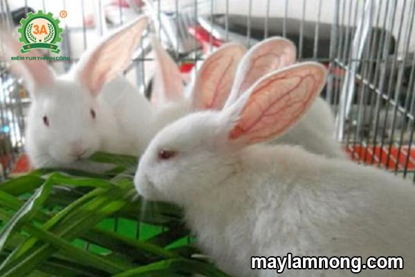 thức ăn cho thỏ