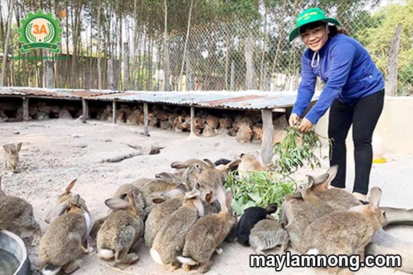 cách nuôi thỏ, nuôi thỏ, kỹ thuật nuôi thỏ, nuoi tho, nuôi thỏ thả vườn, ky thuat nuoi tho, kỹ thuật nuôi thỏ thả vườn