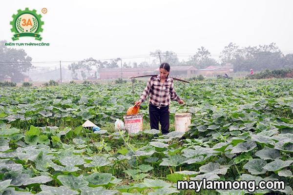 trồng bí đỏ hồ lô