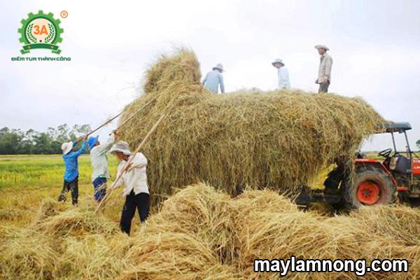 nông nghiệp không chất thải